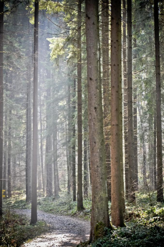 frühlingshafter Märchenwald